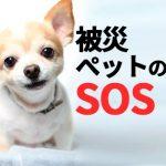 熊本地震・被災迷子ペットが保護施設に溢れてピンチ!県外各地でも飼い主募集中