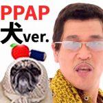 ピコ太郎びっくり?!PPAP犬バージョンの動画がかわいすぎる!