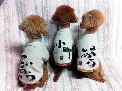 浅田真央の愛犬エアロ、ティアラ、小町