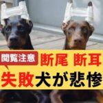 【悲惨】断尾・断耳に失敗した犬の姿!断尾・断耳は意味がない